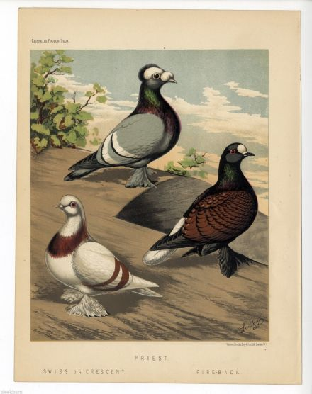 1875 Antique Colour PIGEONS SWISS FIRE-BACK and PRIEST by J. W. Ludlow